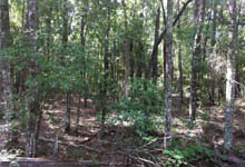 Successional Hardwood Forest